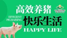 高效养猪  快乐生活