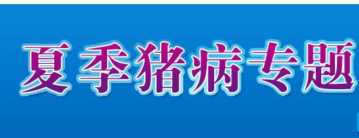 夏季猪病防治_猪病小知识-中国养猪网专题