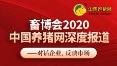 畜博会2020中国养猪网深度报道